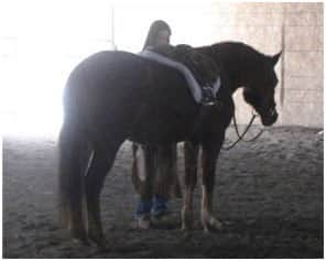 las vegas equestrian property